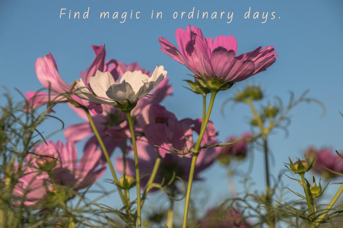 Find magic in ordinary days.